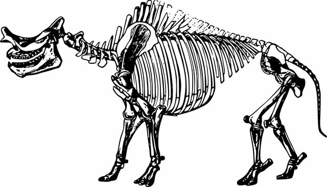Picture of dinosaurs skeleton.