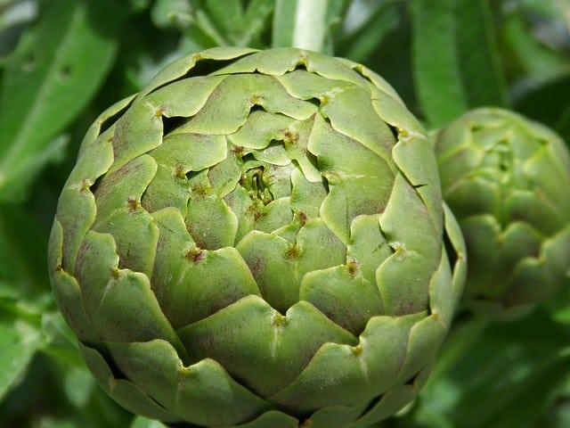 Artichoke to Remove Cholesterol and Fat from Your Bloodstream