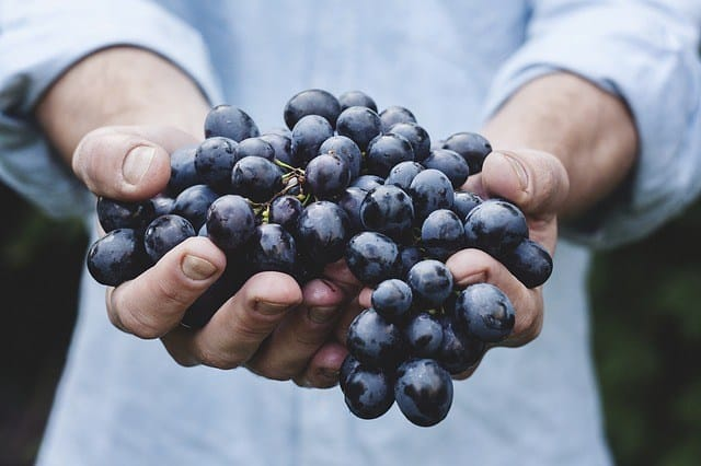 The picture of the grapes in a man's hands.