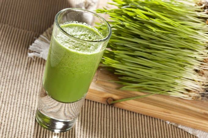 wheat grass grow and drink